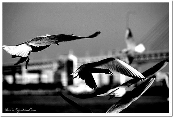 Seagull IV 2