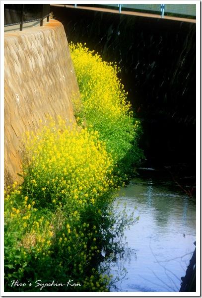 春の小川1